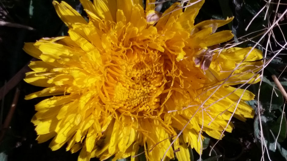 2015-10-02-seed-to-table-15