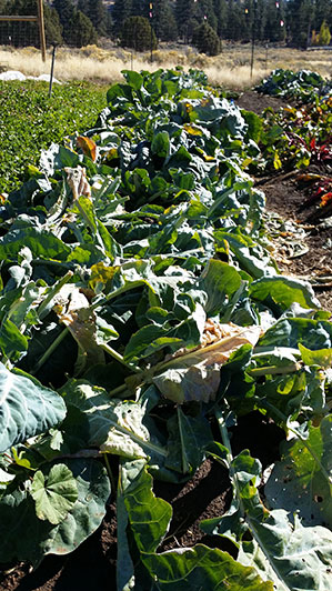 2015-10-02-seed-to-table-17