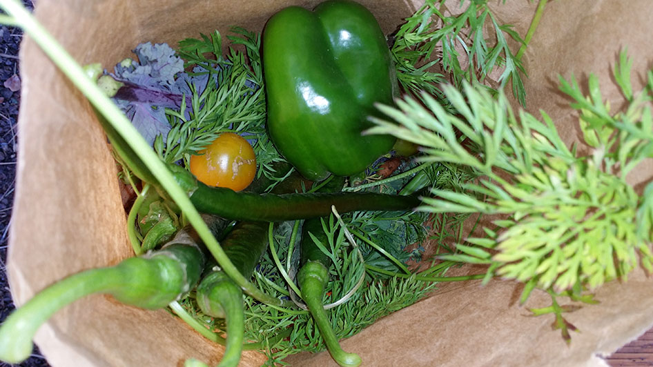 2015-10-02-seed-to-table-37