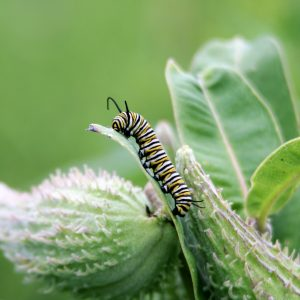 Douglas Mills Caterpillar