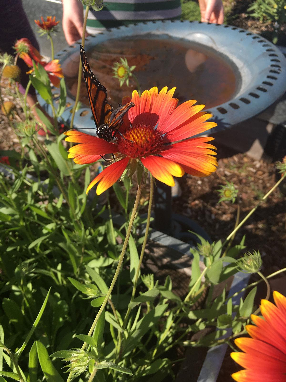 2017-09-11-monarch-habitat-01